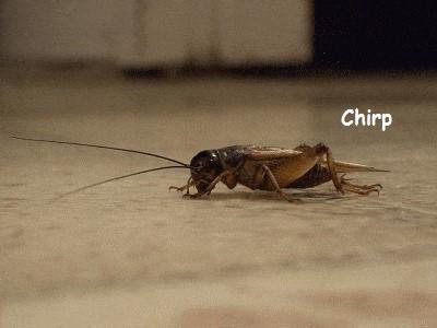 chirp.jpg